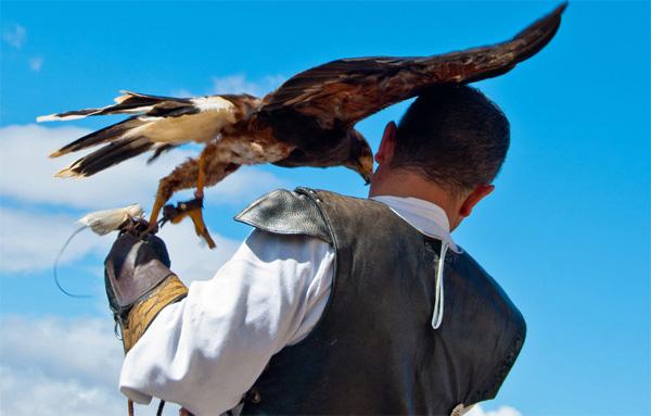 imagen de exhibición de cetrería, Villena, Alicante